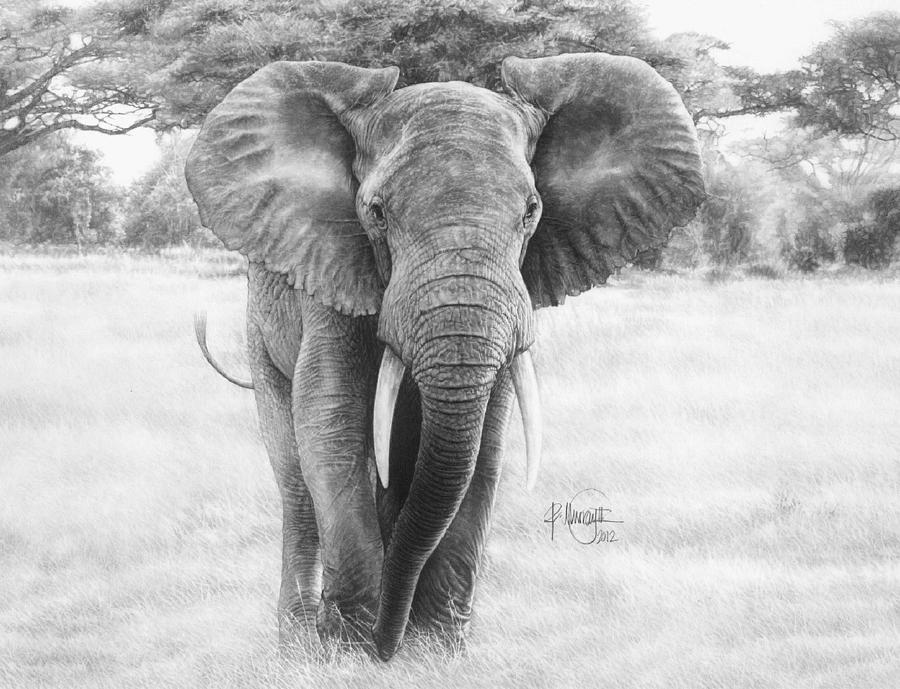 Elephant face pencil drawing