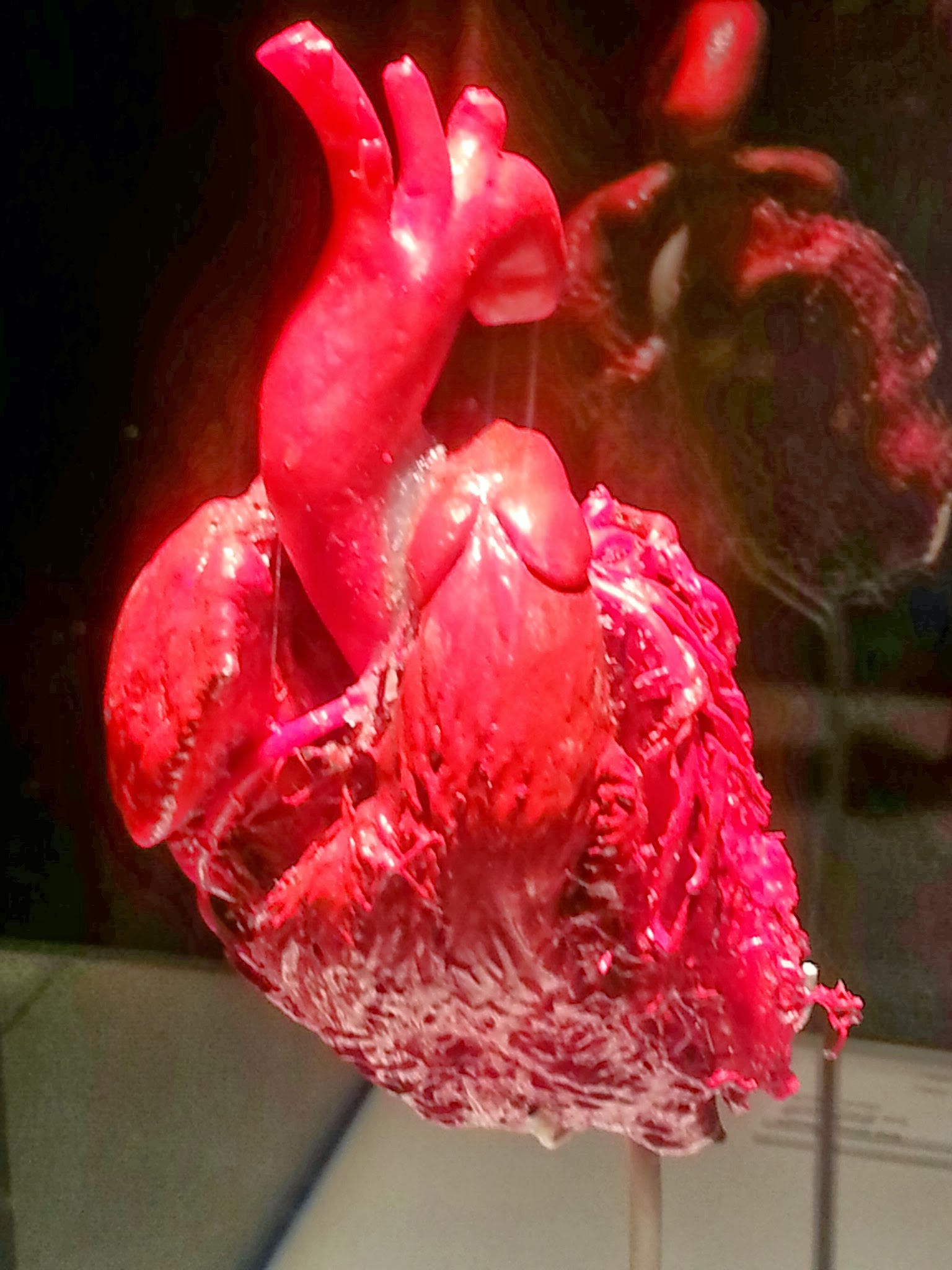 Real human heart images - photo#26