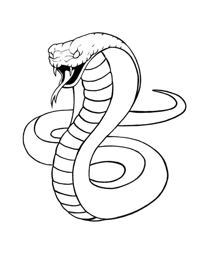 Line Drawing Snake : How to draw snake skin cliparts