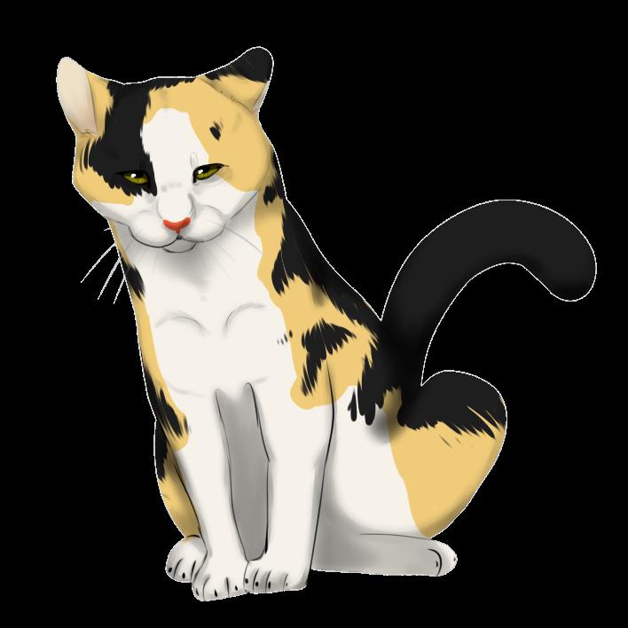 Cat Cartoon Drawings