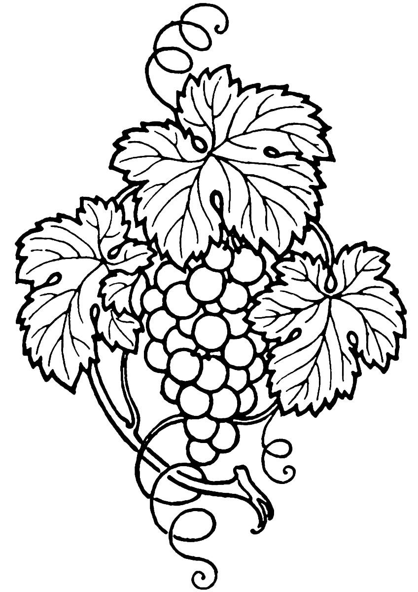 Line Art Vines : Grapes clip art cliparts