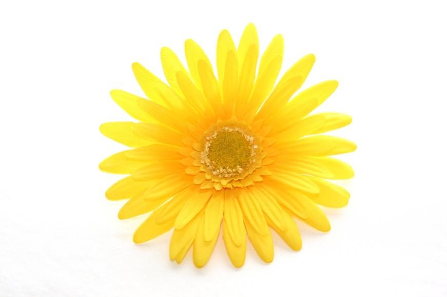 Yellow Daisy Png bright Yellow Gerber Daisy