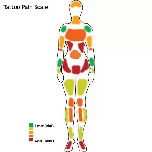 Diagram Of The Forearm