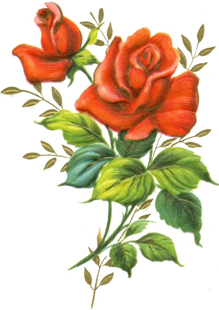 deviantART: More Like Red rose png by jinifur