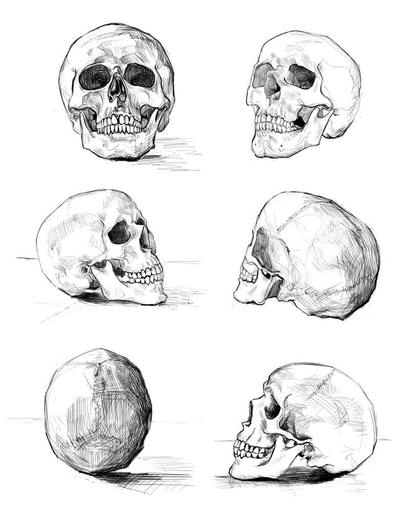 Как нарисовать череп фото схема