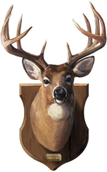 Deer Head Cliparts Co