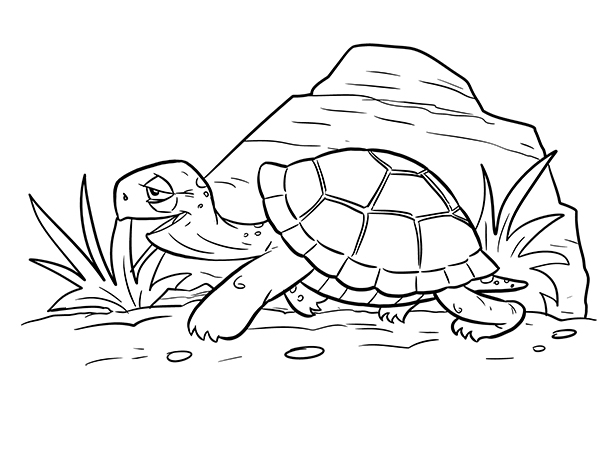 How To Draw A Cartoon Turtle A Step By Step Drawing Tutorial