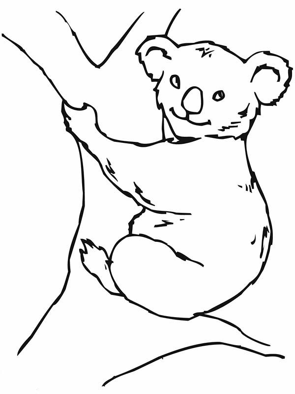 k is for koala bear coloring pages - photo #31
