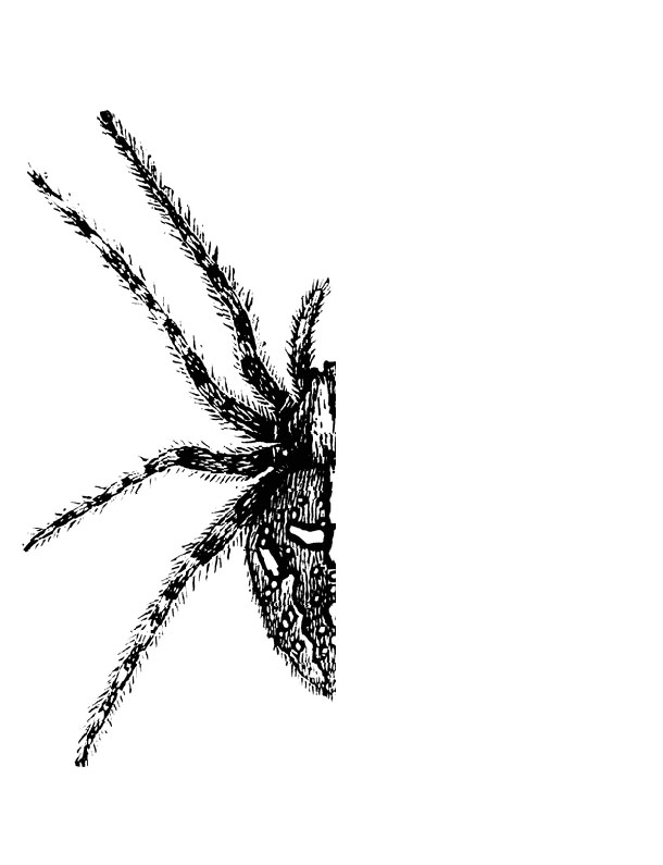 Spiders Clip Art - Cliparts.co