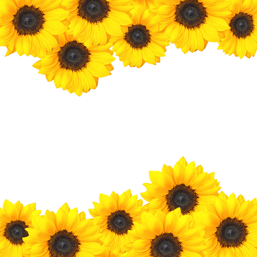 Clipart Sunflowers - Cliparts.co