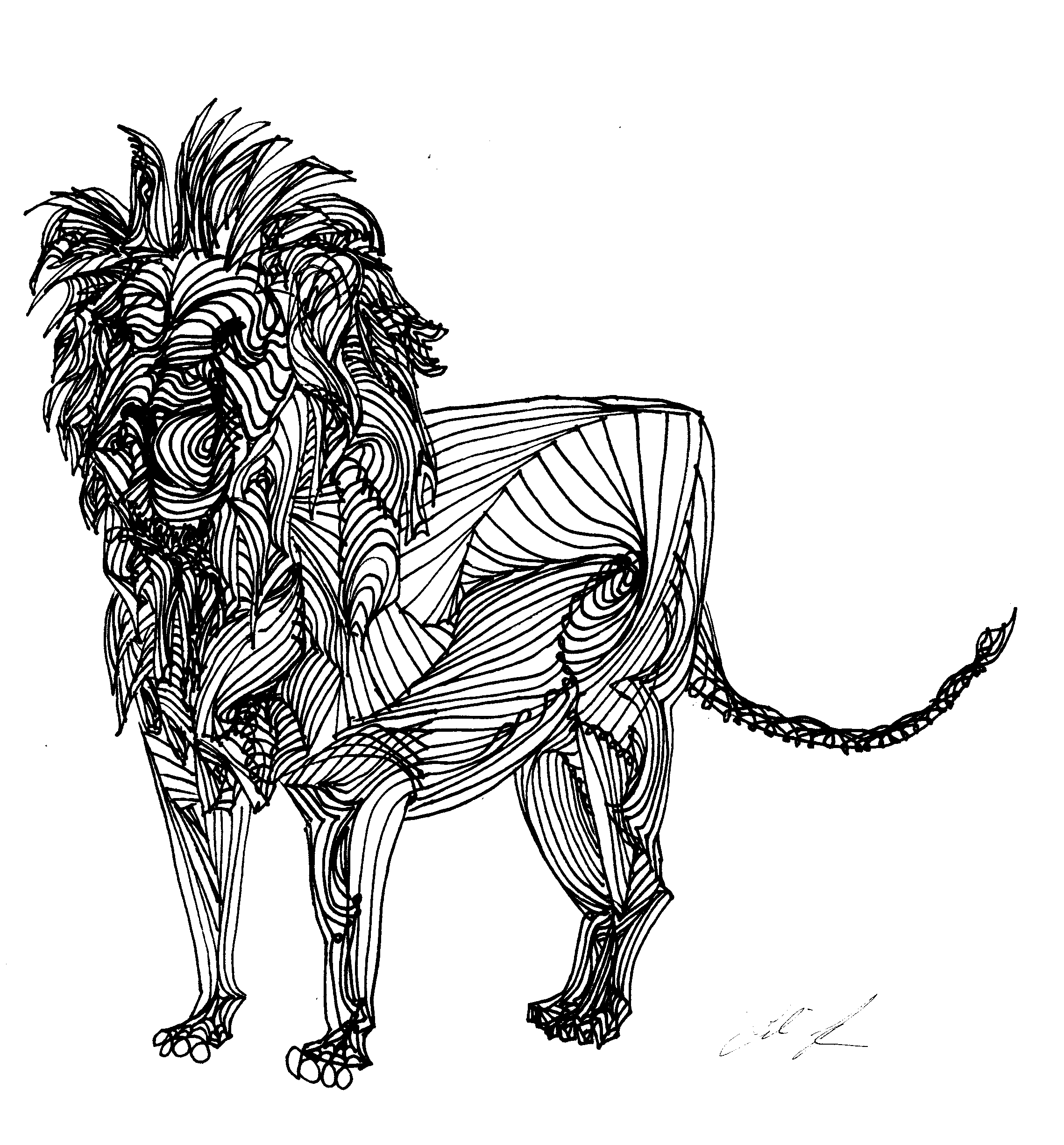 Line Art Work : Lion line drawing cliparts