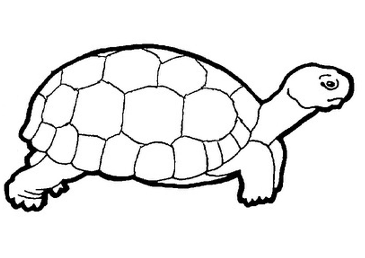 Line Drawing Of Desert Animals : Tortoise clipart cliparts