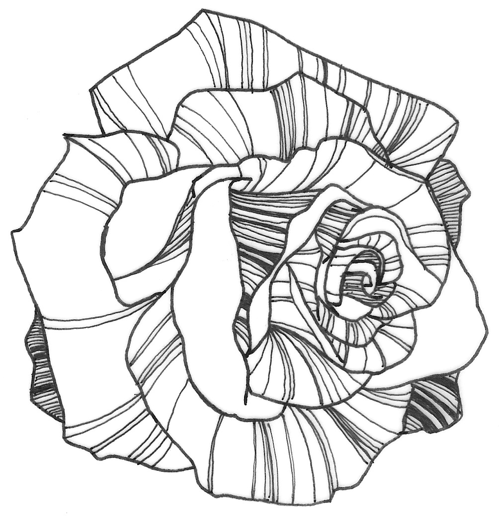 Line Drawing Of Rose Flower : Flower line drawing cliparts