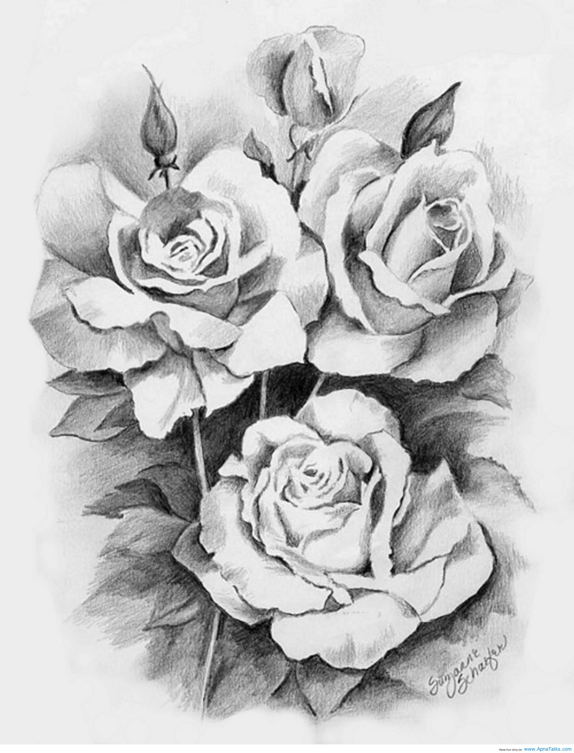 Roses Drawings Cliparts Co