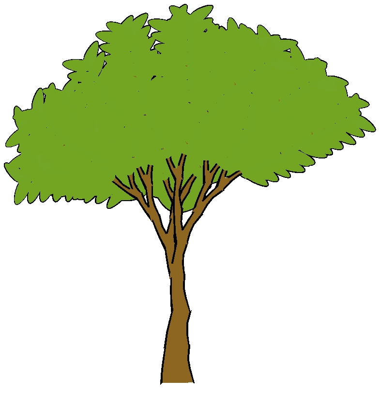 how to draw a cartoon tree with leaves