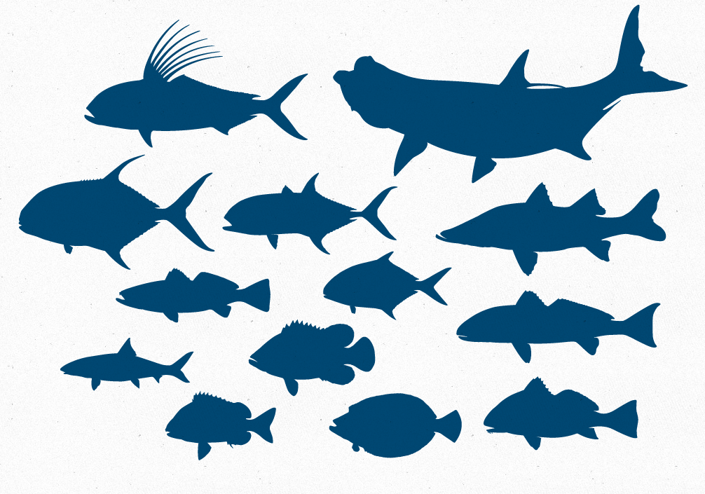Free Vector File – 13 Inshore Game Fish Silhouettes | The Creative ...