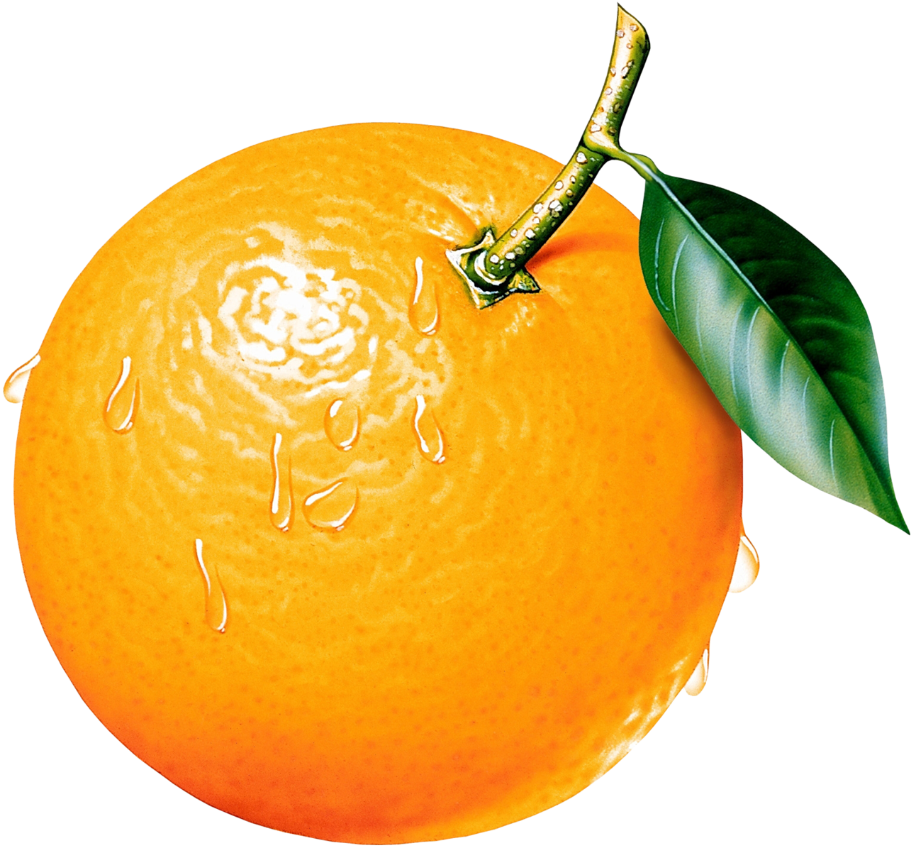 Pictures Of Oranges Cliparts Co