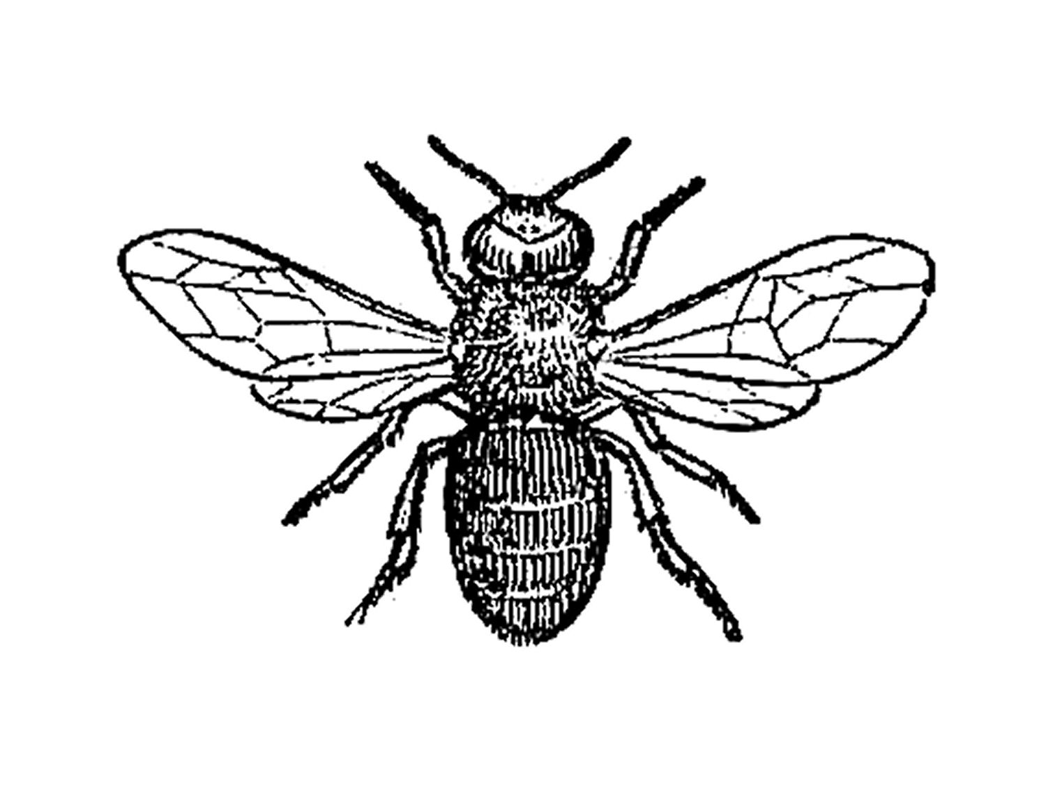 Line Art Bee : Bee line art cliparts