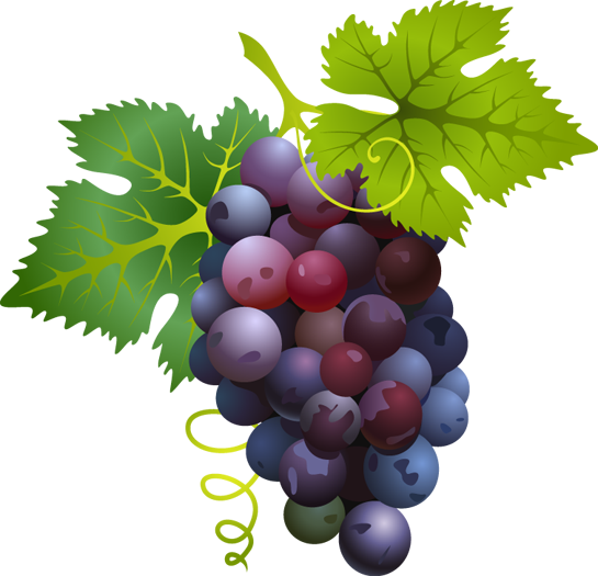 30 images of Pictures Of Red Grapes . You can use these free cliparts ...