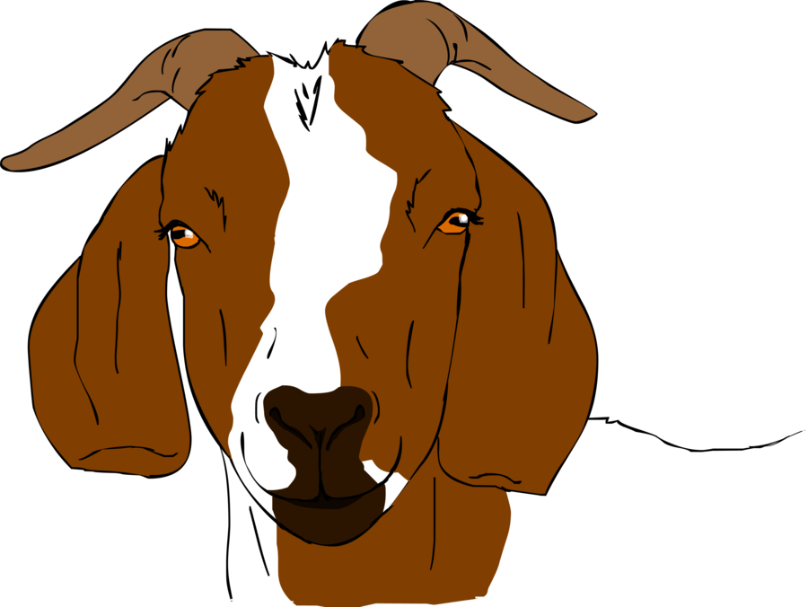 Goat Farming Business Plan India For Profitable Commercial
