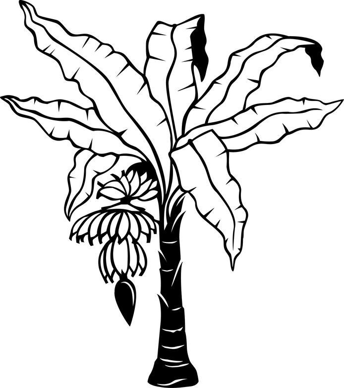 Narra Tree Clipart Black And White