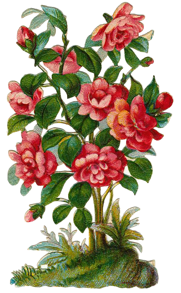 Leaping Frog Designs: Vintage Victorian Scrap Rose Bush Free PNG Image