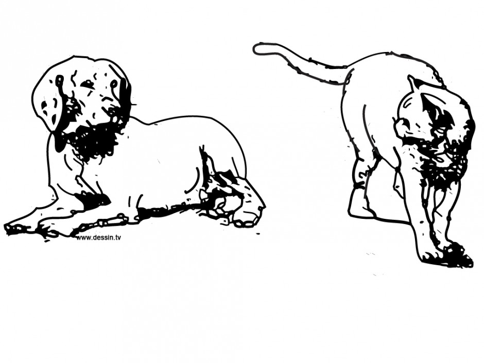Vector Of A Cartoon Bull Dog And Cat Playing Tug Of War