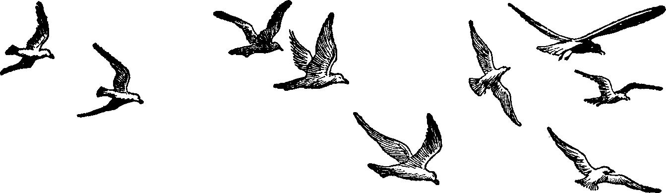 Flying bird cartoon black and white - photo#9