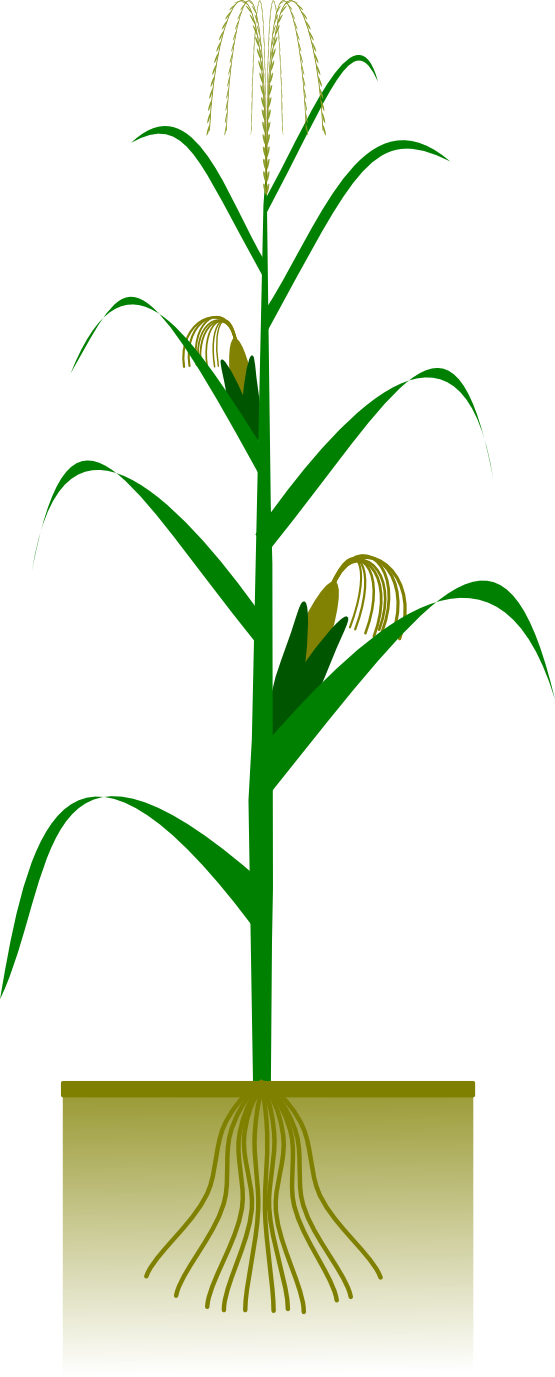 Free to Use & Public Domain Plants Clip Art - Page 23