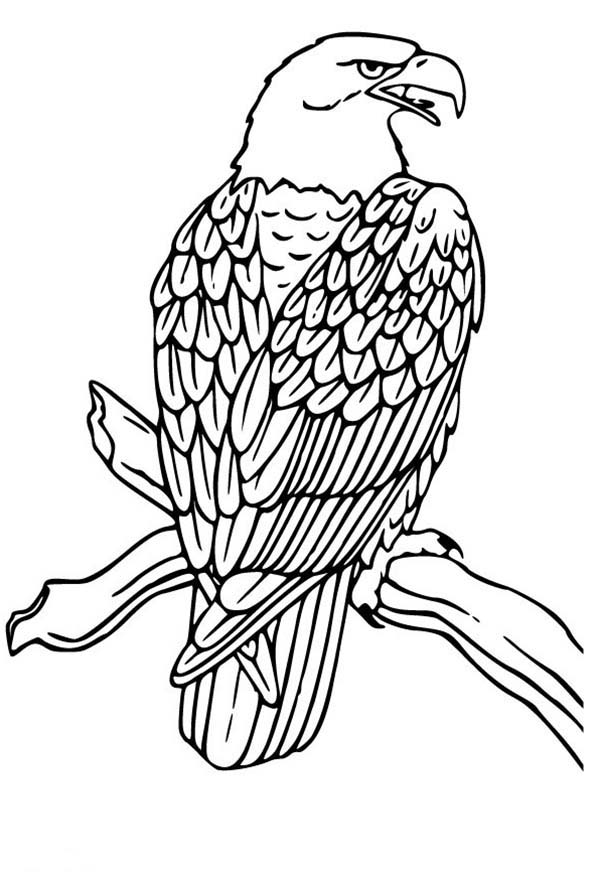 eagle coloring pages easy - photo #5