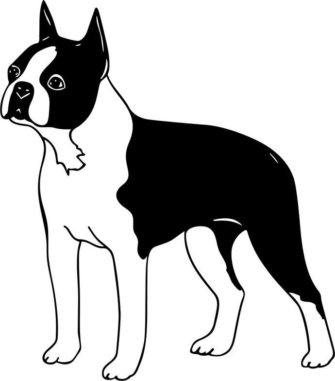 Image Result For Boston Terrier Coloring