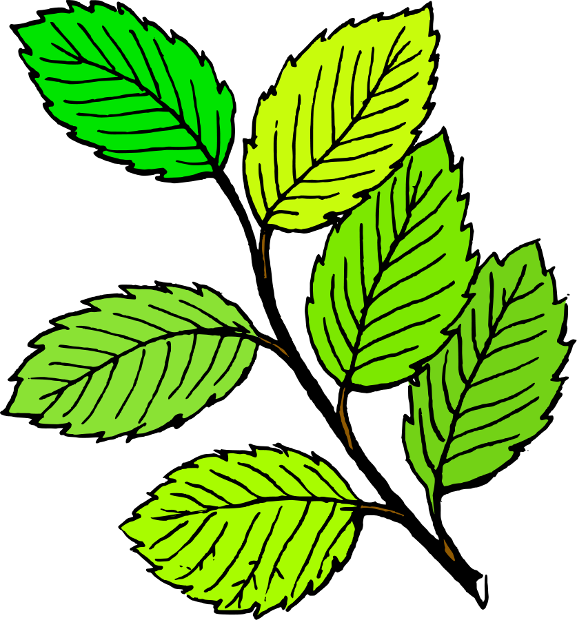Leaves Clipart, vector clip art online, royalty free design ...