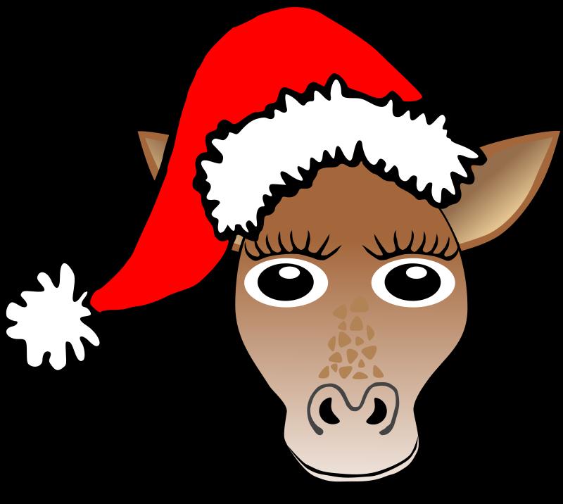 Funny Donkey Face Funny Giraffe Face Cartoon