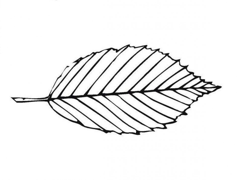 Designs Of Leaves From Different Trees Coloring Pages | Tree ... | 716x940