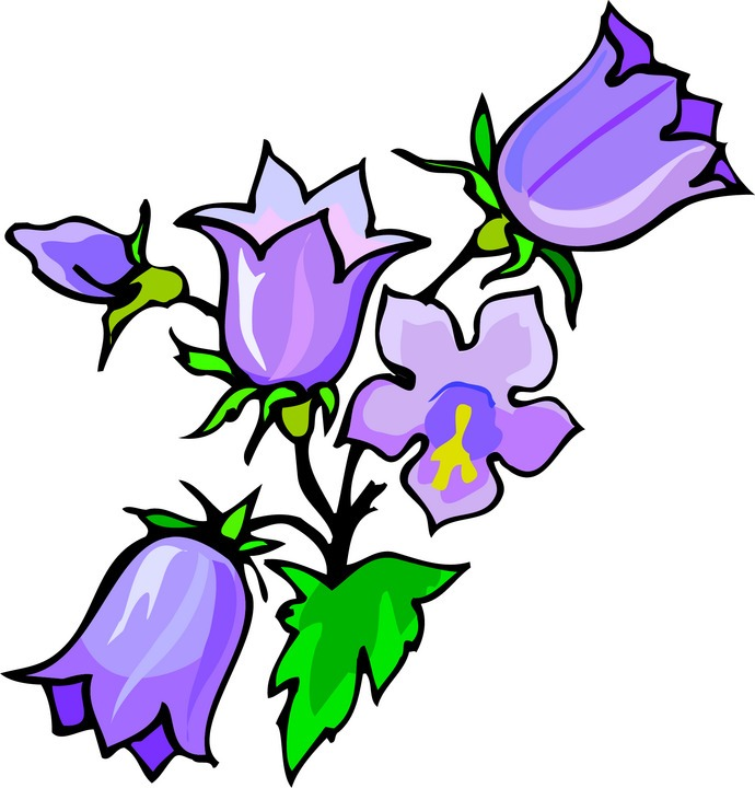 clip art forget me not flower - photo #50