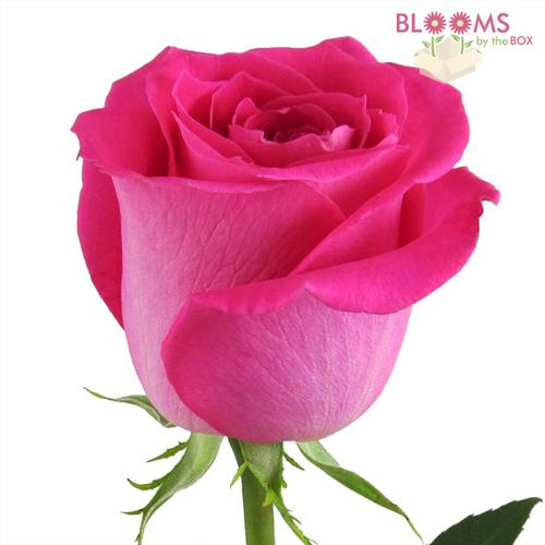 What Is The Meaning Of Ring A Ring A Roses