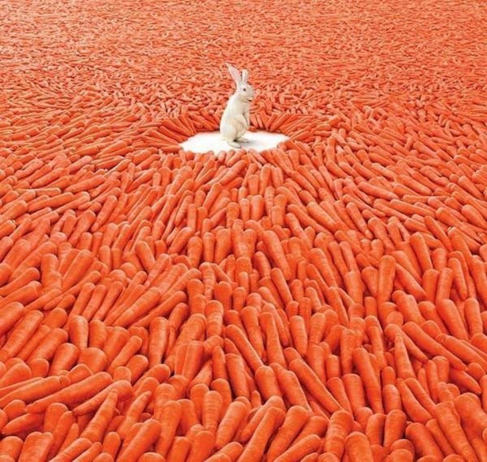 Поздравление на свадьбу вот тебе морковка 760
