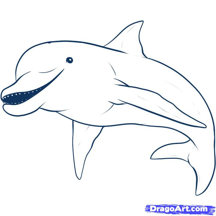 Line Art Dolphin : Dolphin line drawing cliparts