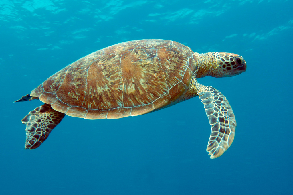 The turtle retreat - Queensland Blog