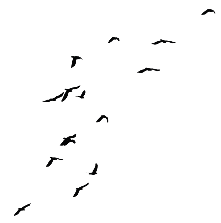 Flock of Birds Png Birds 05 Png Stock by
