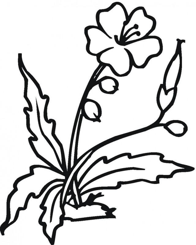 Pom Poms Clip Art Cliparts Co Pom Pom Coloring Pages