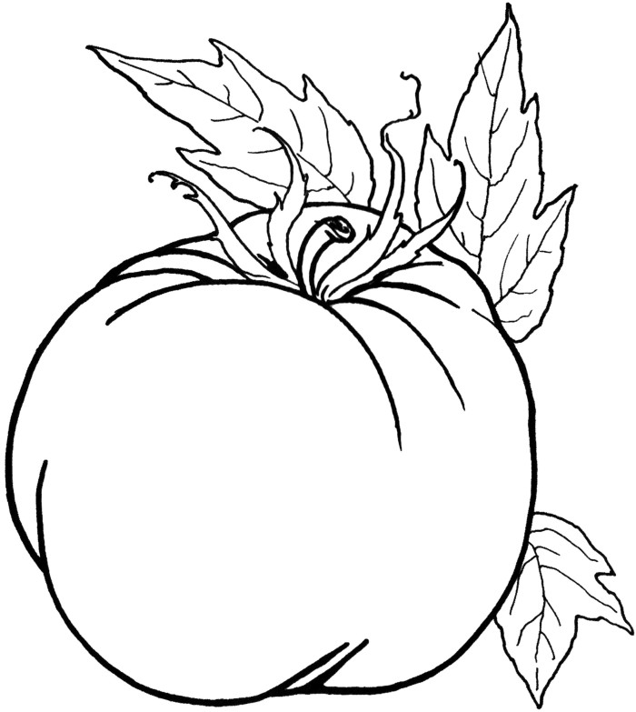 free printable tomato coloring pages - photo#26