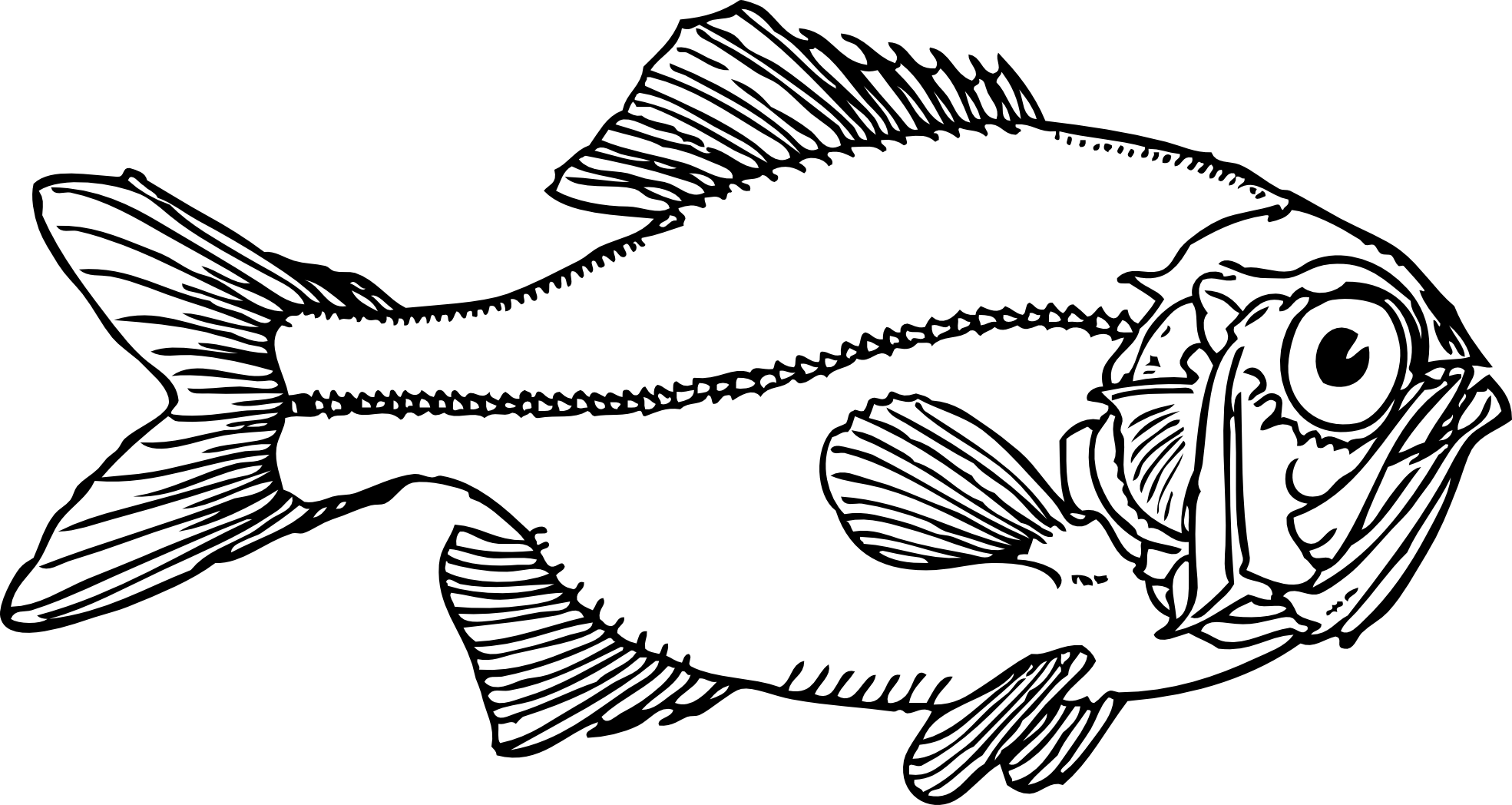 Line Art Year 5 : Fish line art cliparts
