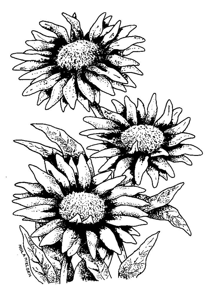 Flower In Line Drawing : Flower line art cliparts
