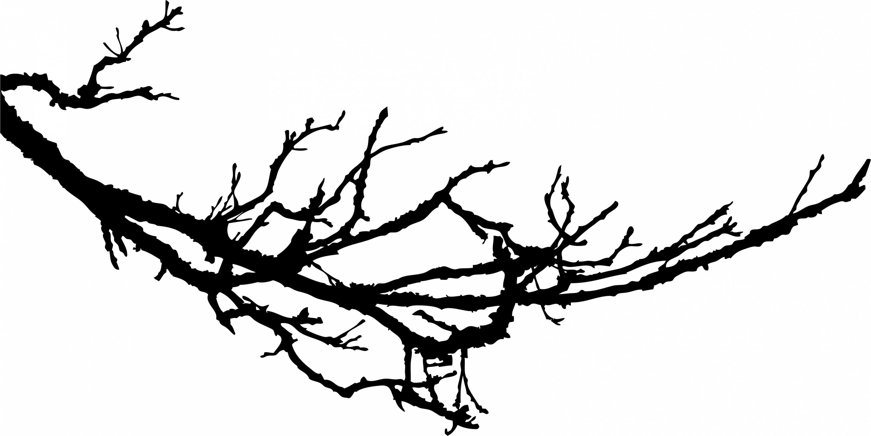 Clip art tree branches black and white