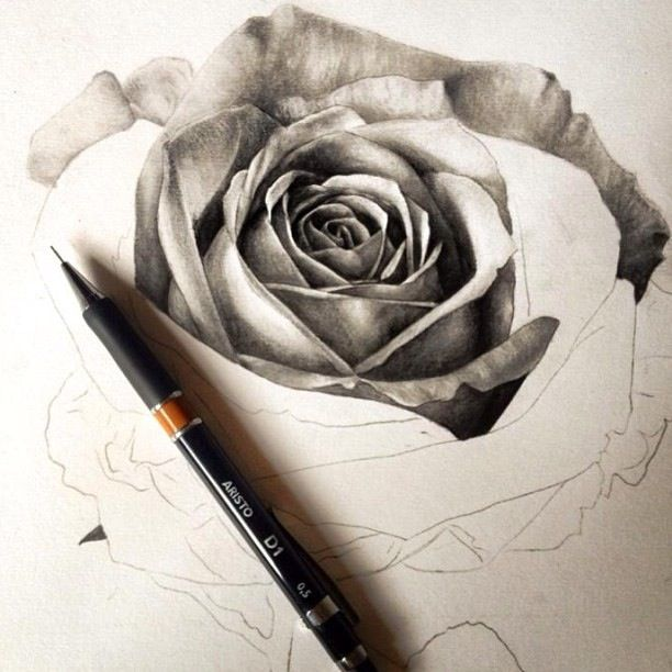 Black and white rose drawing border