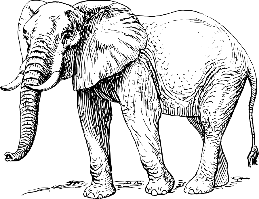Free Elephant Clipart, 1 page of Public Domain Clip Art