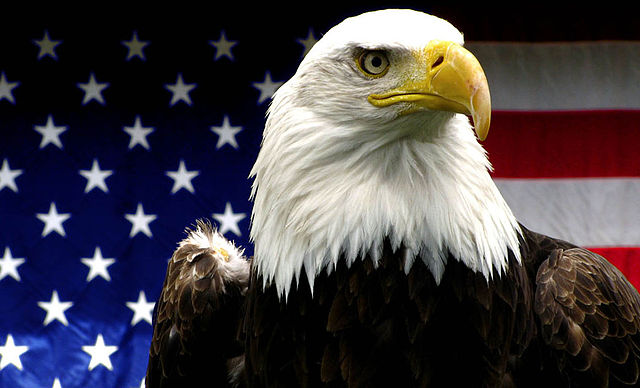 Good news for America's mascot: the Bald Eagle is no longer endangered