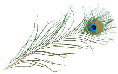 simple peacock feather drawing imagebasket     cliparts co