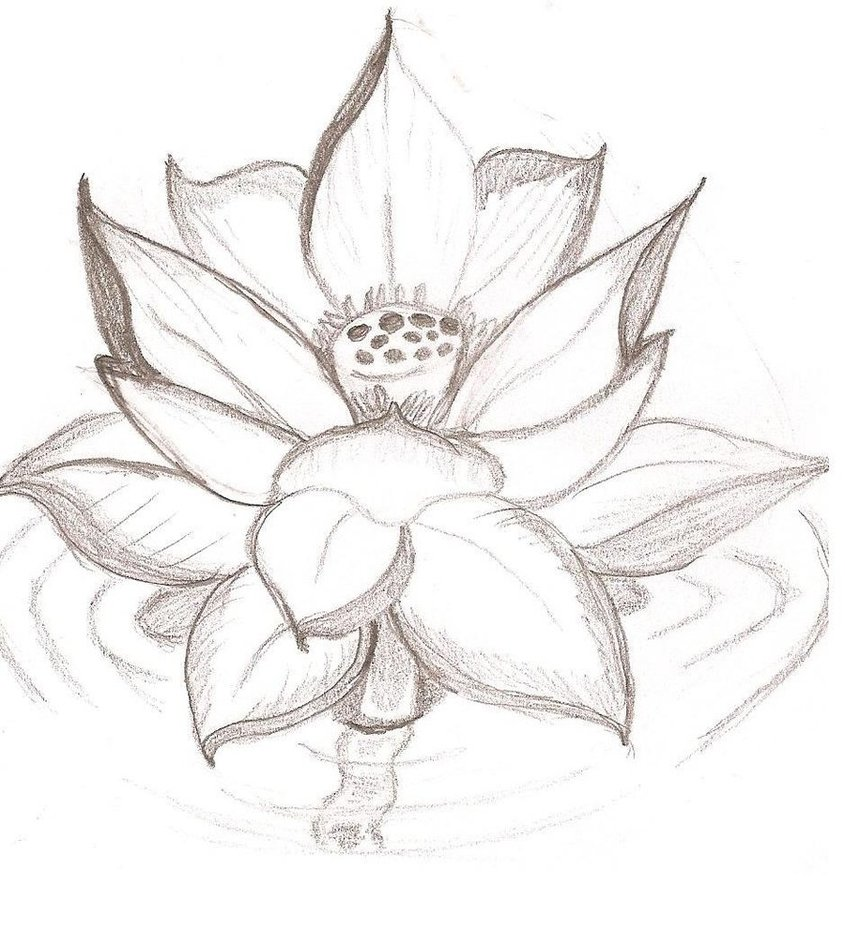 Lotus Flower Drawing Cliparts